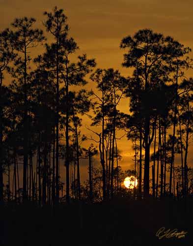 Pine-Land-Sunset-01